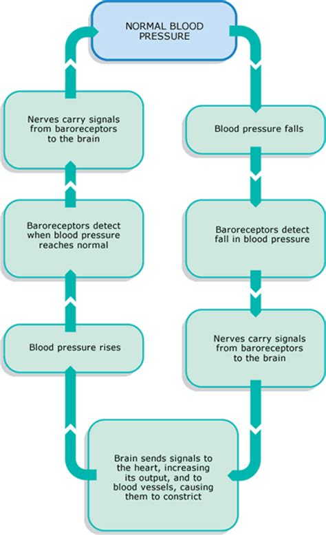 celey for blood pressure control picture 11