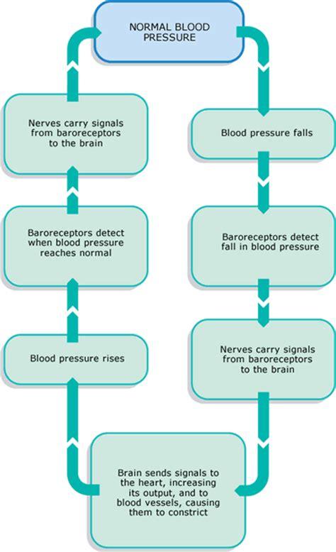 Blood pressure control picture 6