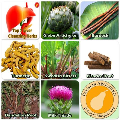 herbs for liver cleansing picture 3