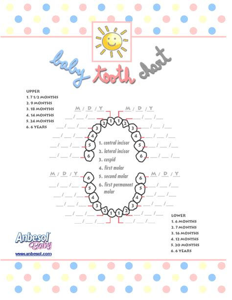 child's teeth chart picture 9