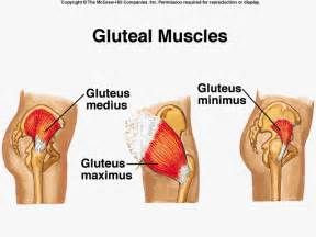 gluteus maximus syndrome picture 1