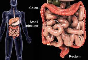 what happens when cancer penetrates the lining of the colon picture 11