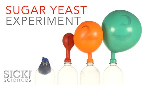 yeast and sugar picture 14