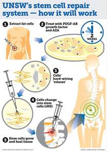 stem cells regrow h picture 6