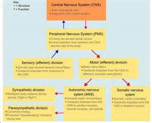 central nervous system herpes picture 6