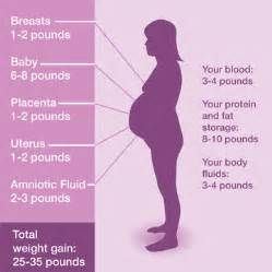 weight gain during your first trimester picture 6