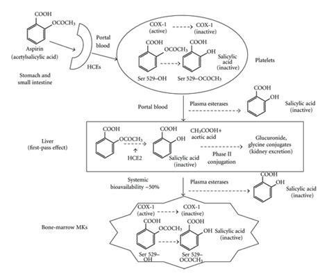 aspirin as blood circulation enhancer picture 9