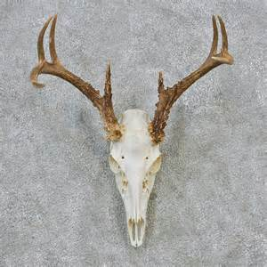 deer skull and h picture 14