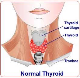 can urine therapy cure thyroid picture 11