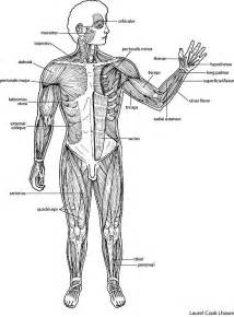 muscle strength definition picture 10