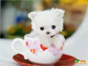 phonerotica white cute fudi picture 6