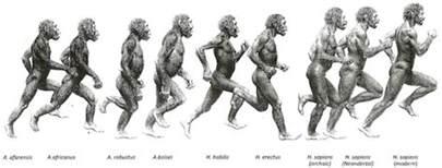 human pheromones 2013 picture 2