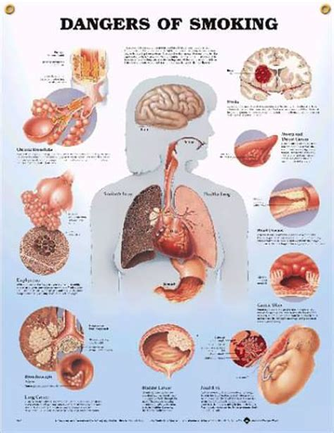 effects of k2 on the lungs picture 6
