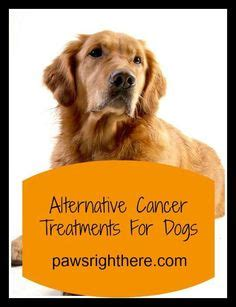 canine bladder cancer alternative treatments picture 14