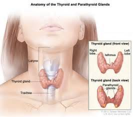 groin nodes and thyroid picture 6