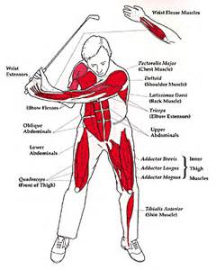 arms bones and joints when streching picture 9