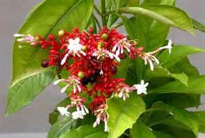 uses of serpentina herbal medicine picture 7