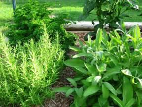 herbal garden picture 6