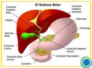 bladder cancer fluff picture 5