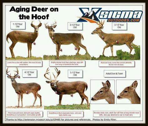 will deer antler increase size of s picture 10