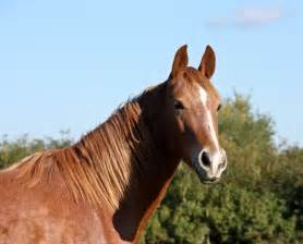 equine herpes picture 10