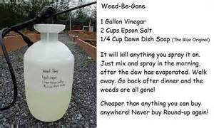 joe lye weed herbal remedy picture 9