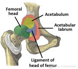 source hip & joint picture 13