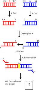 ligation picture 6