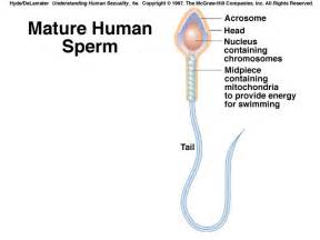 testosterone cycle sex picture 10
