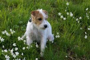 iiritable bowel disorder dogs picture 13