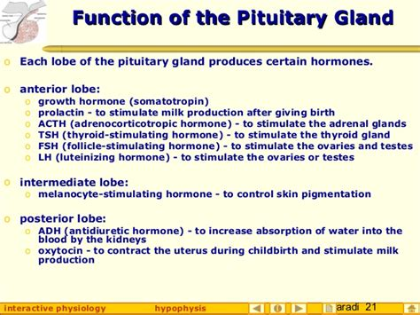 pituitary body picture 3