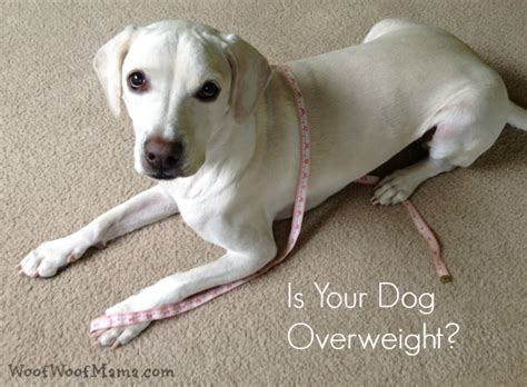 canine coughing weight loss picture 6