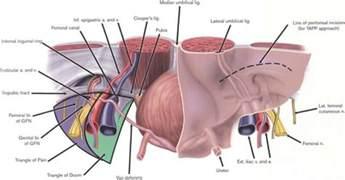 penis exam picture 14
