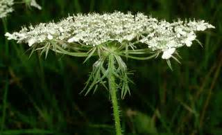 what herbs react with the delta and mu picture 8