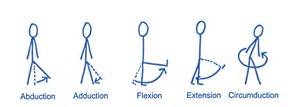 joint flexion rotation anatomy picture 11