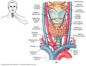thyroid nodules with blood supply picture 1