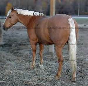 bred mares for sale in ny pa ohio picture 3