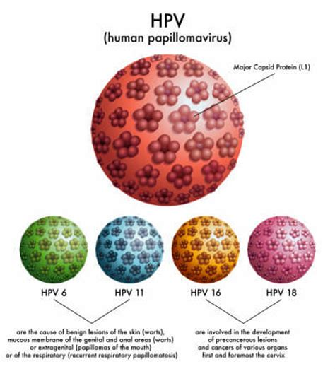 human papilloma virus purchase picture 15
