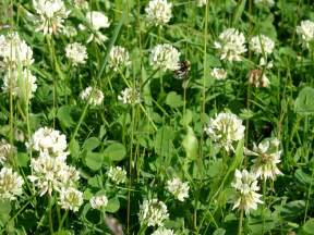 how do i get rid of clover in picture 10