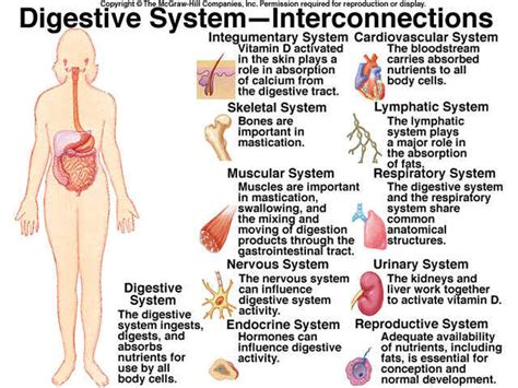 gastrointestinal tract activities picture 11