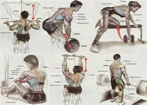 exercises for lats and wing muscle picture 6