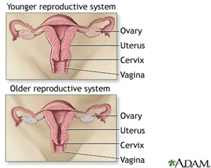 effects on aging on the reproductive system picture 1