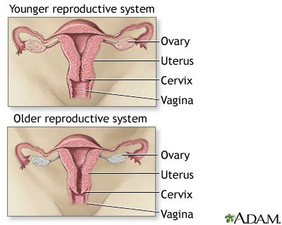 question on aging of the reproductive sysyem picture 12