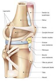 facet joint replacement picture 15