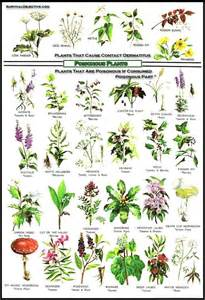 herbal medicine long island picture 13