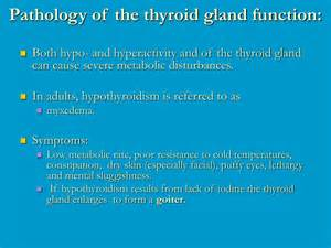 function of the thyroid gland picture 2