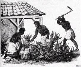 compulsory female slavery law picture 10