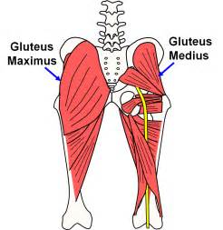 severe pain in left gluteus maximus torn tear picture 7