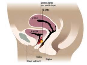 can viagra help to keep an erection once ejaculated inside vagina picture 7
