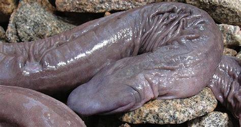 trinidad men size penis picture 1